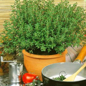 Thyme seed bag Picture