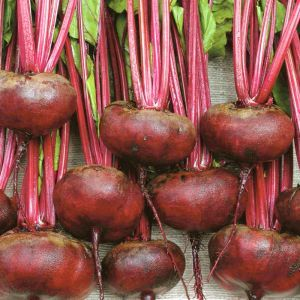 Beetroot Egyptian turnip rooted seed bag
