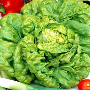 Lettuce all year round seed bag