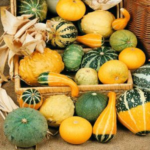 Ornamental Gourds large & small seed bag
