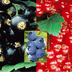 Coll. Blackcurrant/Blueberry/Redcurrant (3x1)