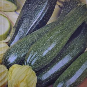 Courgette Black Beauty Seed bag